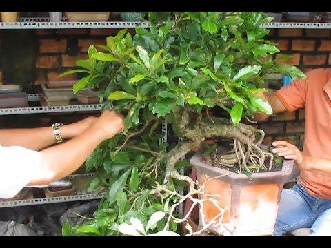 how to create a bonsai tree , bonsai demo