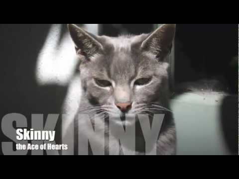 Skinny The Cat and the Magic of Kindness by Donna Rawlins