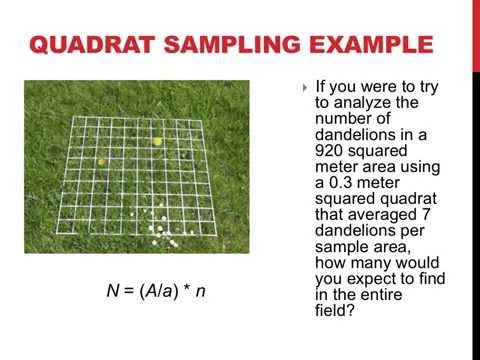 Quadrat sampling and population dispersion