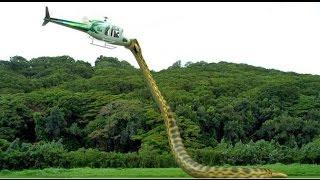 a Cobra Assassina