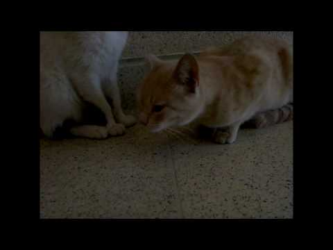 Kittens French Kissing Gone Wrong - Vlog 5 - 02/20/2010