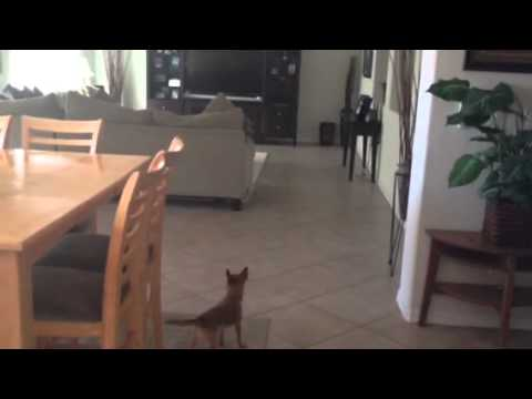 Dog barks at nothing... Ghost?