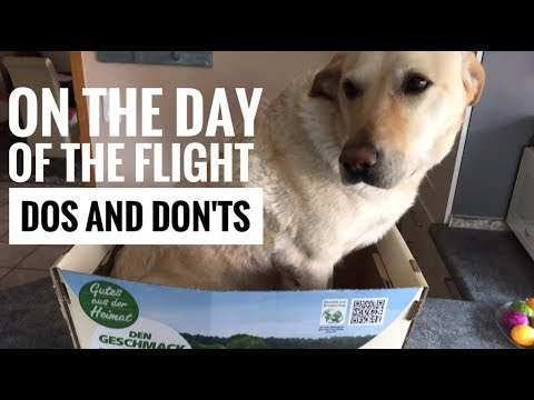 How to travel with a dog in an airplane - part 2