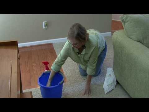 Cleaning Kitchens : How to Clean Dog Urine