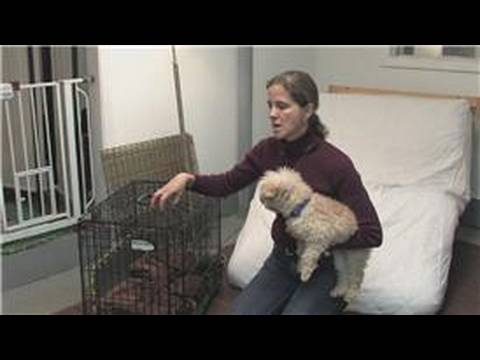 Dog & Puppy Care : What Is Crate Training?