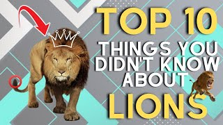 10 Fun Facts About Lions | African Lions Facts and Information Video for Kids
