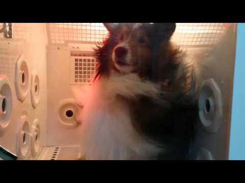 Introducing the Comfy n' Easy Pet Drying System