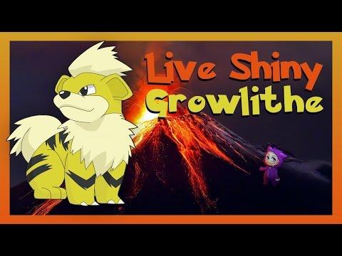 LIVE Shiny Growlithe! Pokemon Sun and Moon