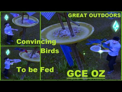 Talking & Feeding Birds at Deer Spring Falls Campgrounds | The Sims FreePLAY