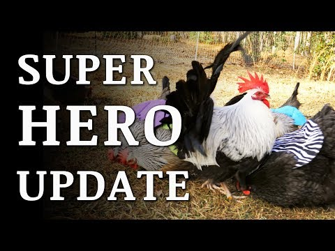 Chicken Superhero Cape (Hen Saddle) UPDATE and Q&A