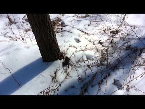 Bad deer video