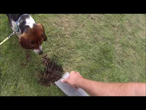 How to stop dogs digging up the garden