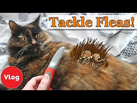 How to Prevent and Treat Your Cat From Fleas | Homemade Flea Repellent Tutorial + COMPETITION!