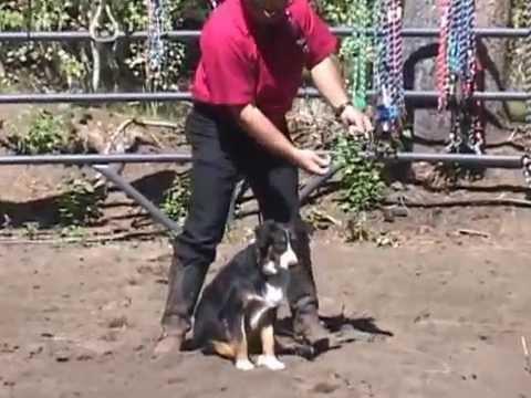 Boz Custom Lead Rope and Dog Leash Online YouTube