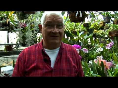 Growing Orchids in Subterranean Conditions
