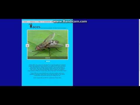 Cluster flies Pest control Auckland