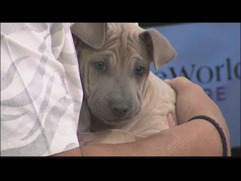 Hawaiian Humane Society is helping pets on Hawaii Island
