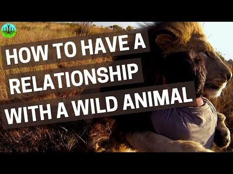 How To Have A Relationship With A Wild Animal