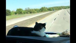 Peanut The Trucker Cat