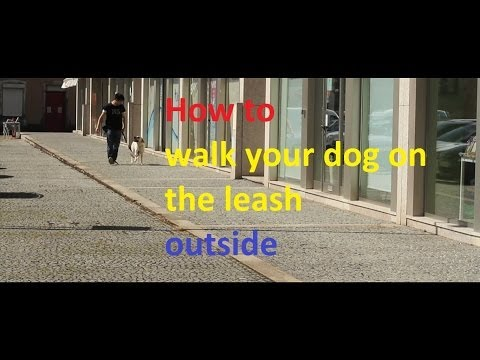 Train me please - Episode 2 - Teach your dog how to walk outside (OLD VERSION)