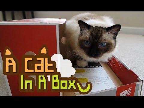 WATCH : A Cat In A Box (My Precious)