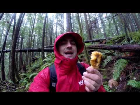 How to Forage Chanterelle Mushrooms Chilliwack BC