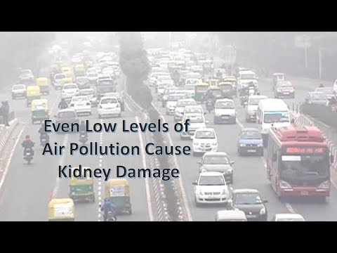 Even Low Levels of Air Pollution Cause Kidney Damage
