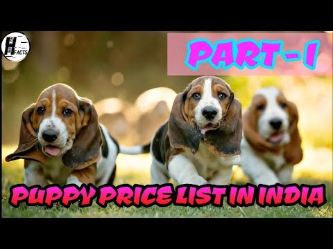 Dog Price List in INDIA | PART - 1 | PRICE LIST | HINGLISH FACTS