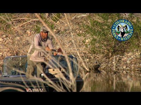 Fly Fishing Colorado - May - Bass & Bluegill
