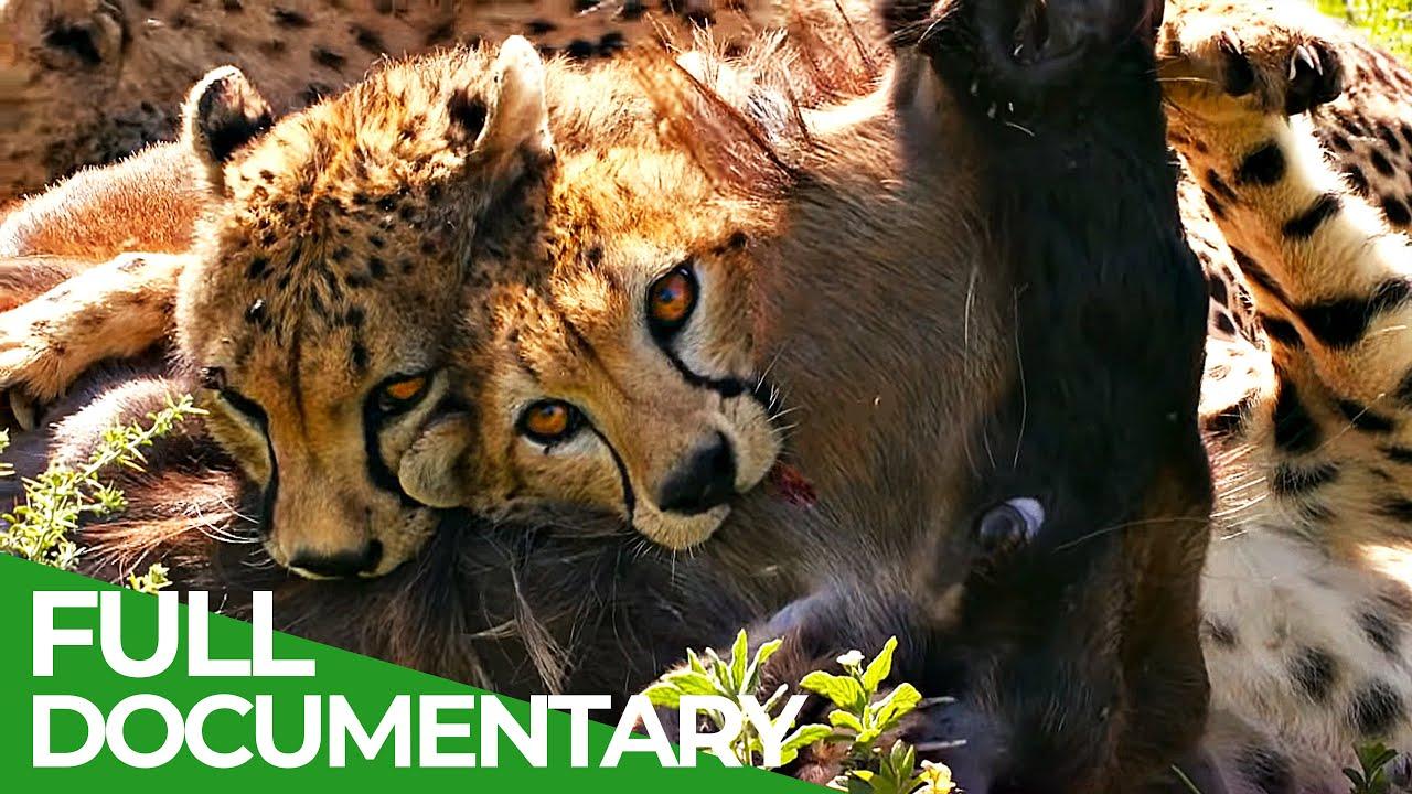 Big Cats - Fastest Hunters of the Serengeti | Free Documentary Nature