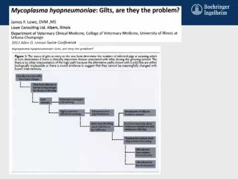 Dr. Eduardo Fano - Mycoplasma hyopneumoniae Infection Chain