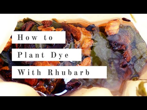 How to Plant Dye with Rhubarb 대황으로 천연염색하기 | natural dyeing tutorial