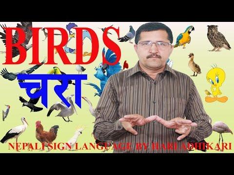 How To Learn Birds Name In Sign ?? For Nepali Sign Language Beginners (NSL) II By Hari Adhikari