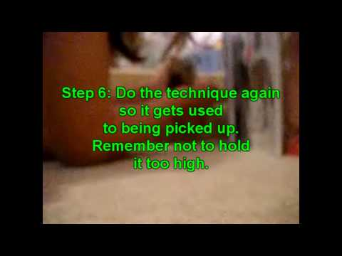 HamsterFacts: How to stop your Hamster from biting you- 10 simple ways!