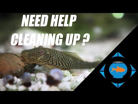 Best Freshwater Aquarium Cleanup Crews