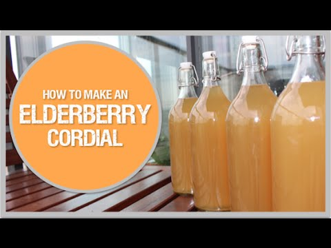 How to make an Elderberry Cordial