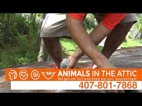 How To Remove and Get Rid of Rats & Rodents, Orlando, FL