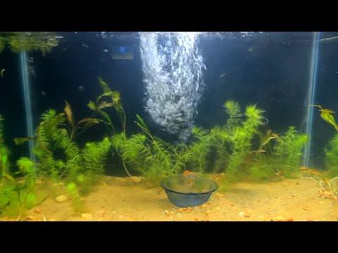 Aquarium I Fish Tank Setup I Koi Fish I DIY ( simple steps )
