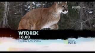 Fox Life HD Polska - Continuity - May 2012