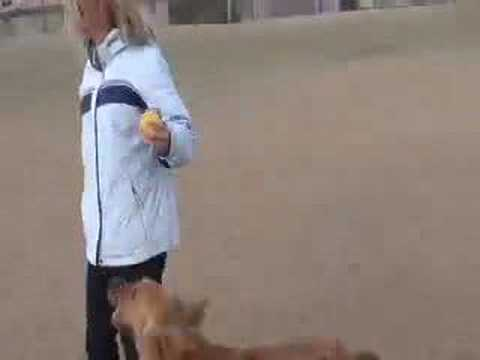 DOG TRAINING: Funny live conversation in dog park