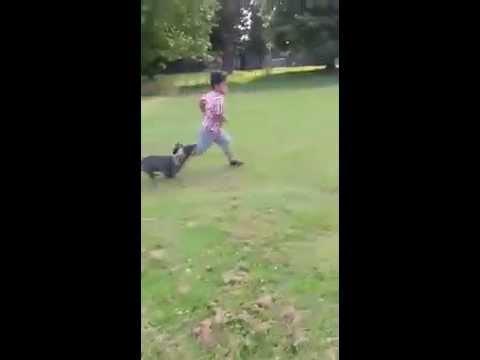 غياث يهرب من الكلب لكن بدون جدوى