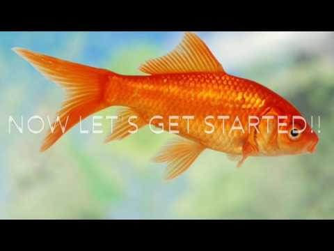 How to clean a Goldfish's tank!!