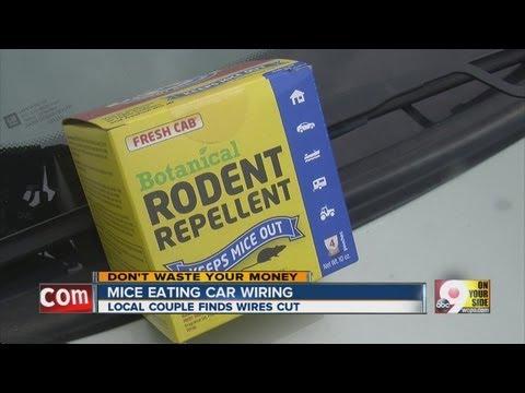 Mice eating car wiring