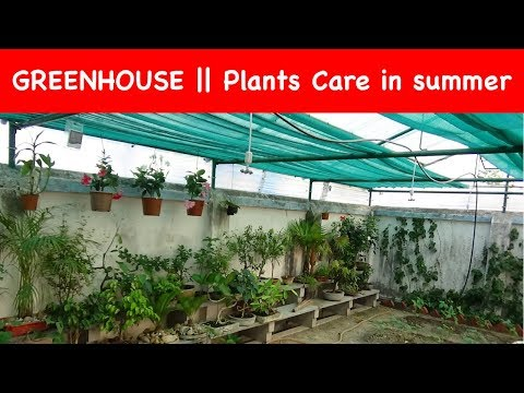 How to Build a GREENHOUSE in your Backyard (with English Subtitle)