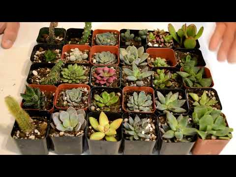 Succulent plants, Where to get them