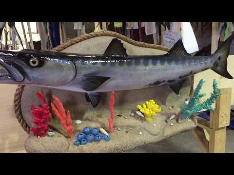 Barracuda Fishmount - Gray Taxidermy Fishmounts, Custom fish reproductions