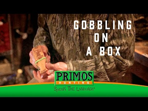 Learn How to Gobble on a Box Call