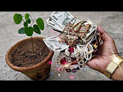 इस पौधे को घर में लगालो और बनो रोड़पती से करोड़पति