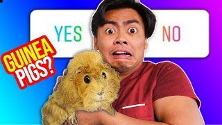 Download Guinea Pigs Control My Life For a Day Video
