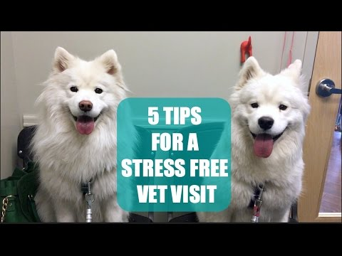 5 Tips for a Stress Free Veterinarian Appointment | All Pets!